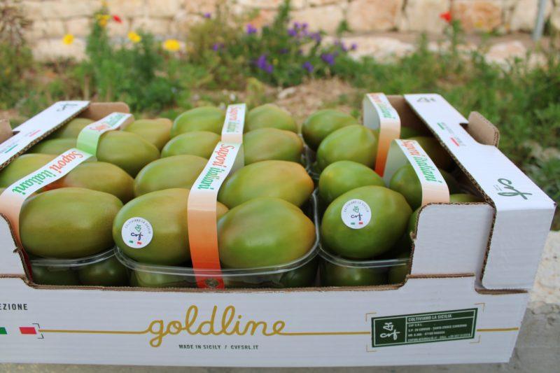 Pomodoro Verde Gold Line